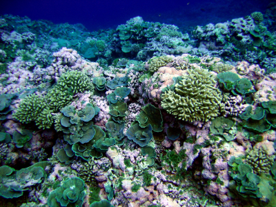 One ecosystem type studied by NASA's COral Reef Airborne Laboratory. Credit: NOAA/NMFS/PIFSC/CRED, Oceanography Team