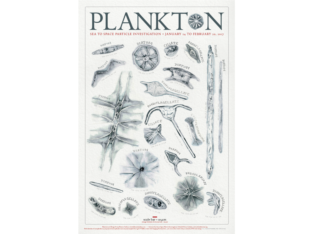 Poster of plankton