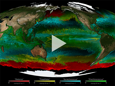 The colors on this map represent types of phytoplankton modeled by a high-resolution ocean and ecosystem model known as MITcgm.