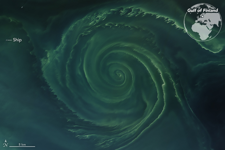 Phytoplankton and blue-green algae blooms in the Baltic Sea
