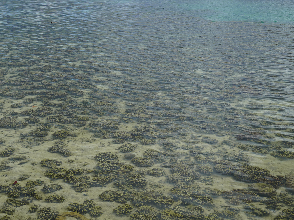 One of the Kaneohe Bay reefs studied by CORAL