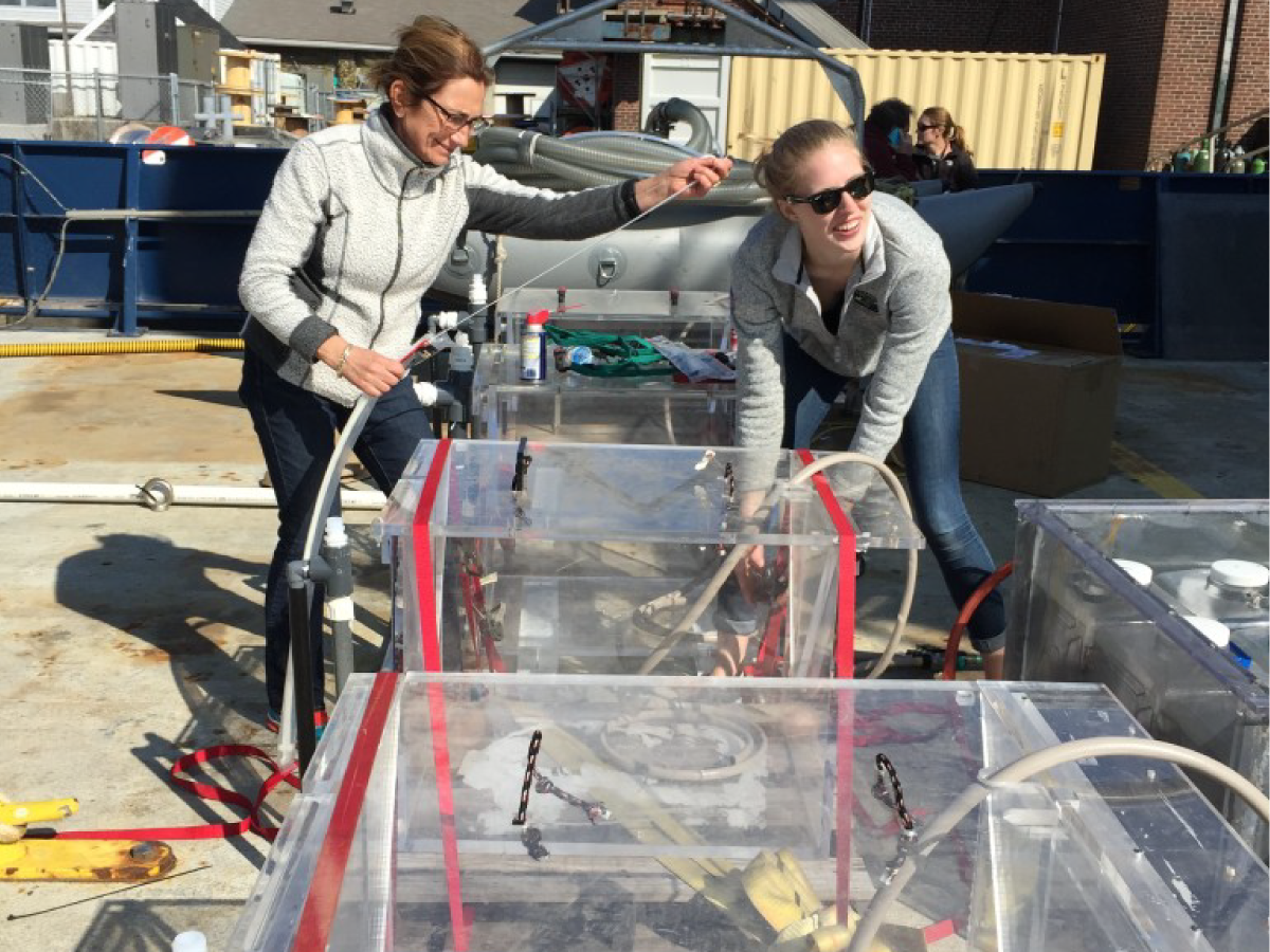 Françoise Morison (URI) and Caitlin Russell secure incubators used to measure phytoplankton growth rates