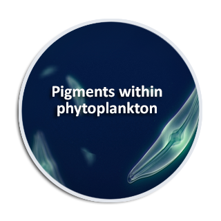 Pigments within phytoplankton