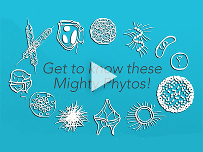 An introduction to phytoplankton and their important roles in Earth's ecosystem. Credit: PACE Mission