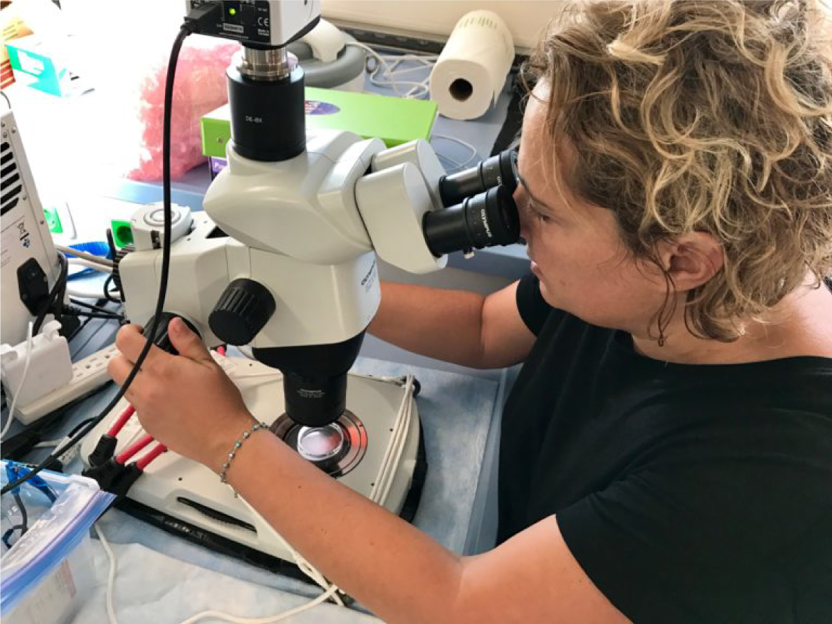 Zrinka Ljubesic uses a microscope to identify phytoplankton and zooplankton in seawater samples
