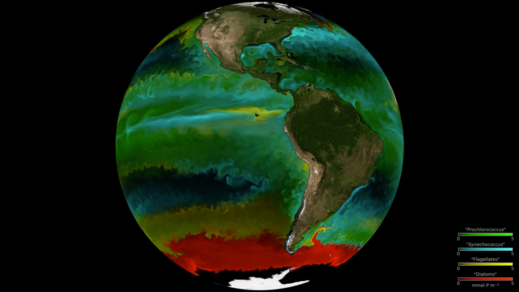 Understanding the location and traits of phytoplankton is key to discovering their roles in the ocean ecosystem. The colors on this map represent types of phytoplankton modeled by a high-resolution ocean and ecosystem model.